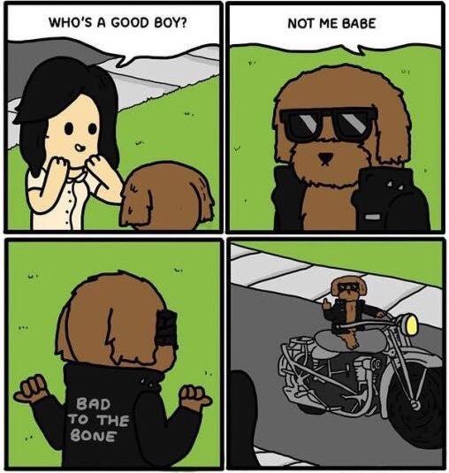 whosagoodboy