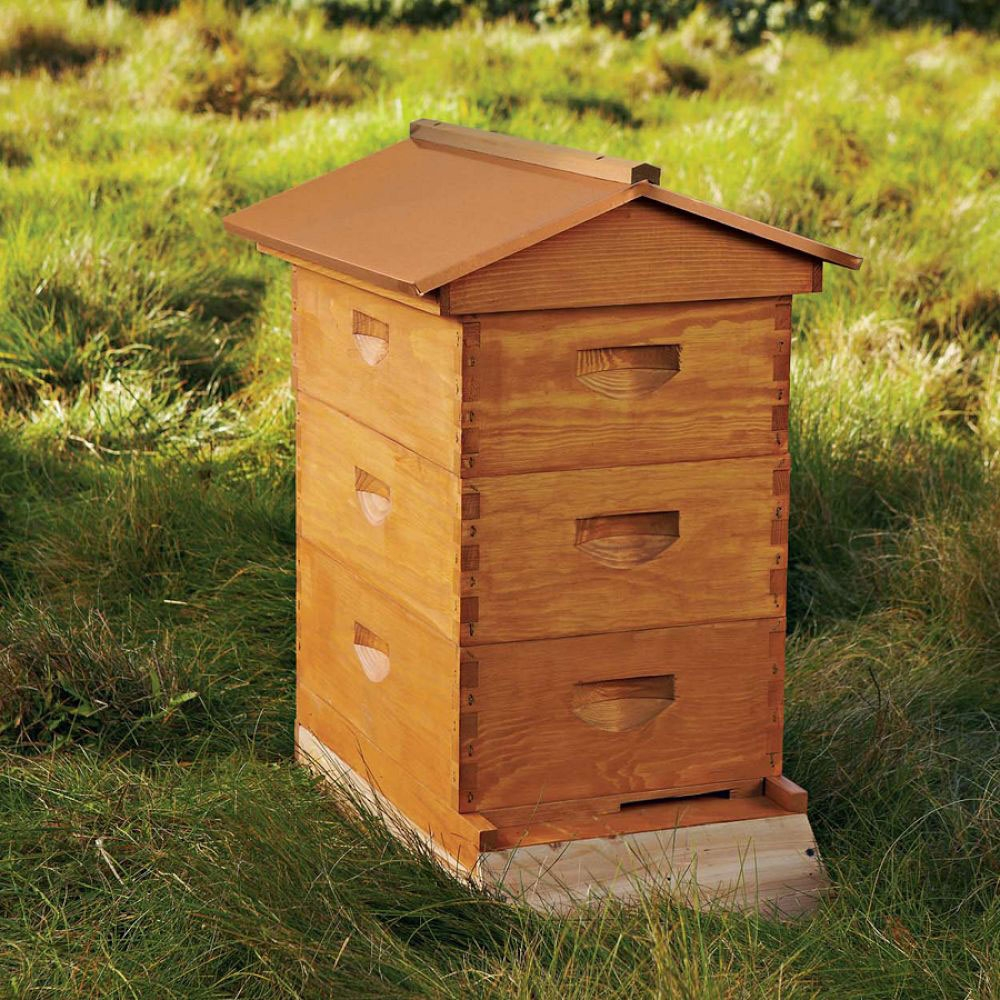 backyard-beehive-starter-kit-1